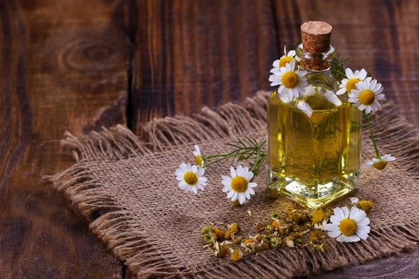 Flower essential oils like chamomile oil is best for aromatherapy.