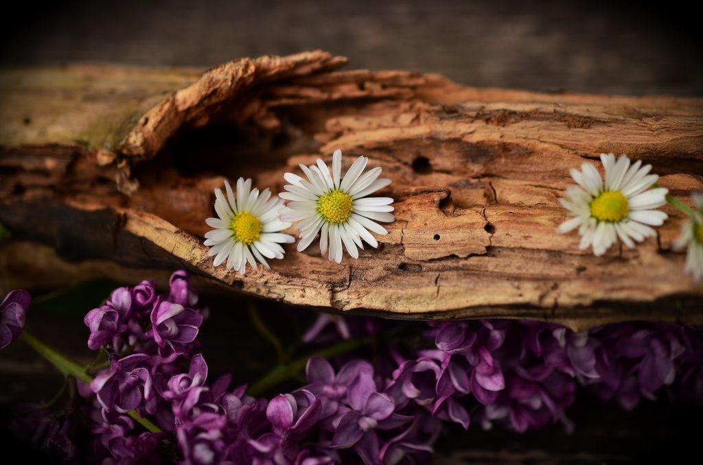 Essential Oils Care - Wood Essential Oil