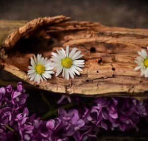 Essential Oils Care - Wood Essential Oil 3
