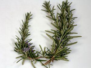 Essential Oils Care - Rosemary Oil Skin Care 1