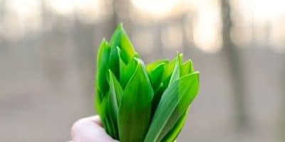 Essential Oils Care - Tea Tree Oil Ingestion