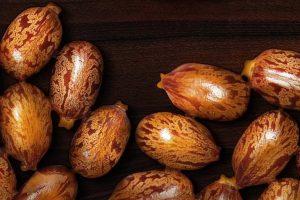 Castor seeds on wooden surface